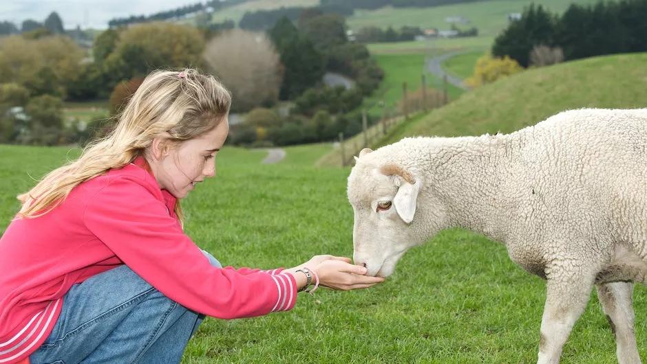 养羊业.jpg
